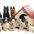 Large group of dogs in and surrounding a kennel against white background — Stock Photo #21416383
