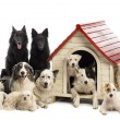 Large group of dogs in and surrounding a kennel against white background — Stock Photo