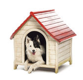 Border Collie in a kennel against white background — Stock Photo