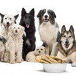 Group of dogs with a bowl full of bones in front of them sitting against white background - Stock Photo
