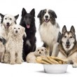 Group of dogs with a bowl full of bones in front of them sitting against white background - Стоковая фотография