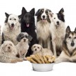 Group of dogs with a bowl full of bones in front of them sitting against white background — Stock Photo #21568159