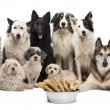 Group of dogs with a bowl full of bones in front of them sitting against white background — Stock Photo