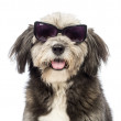 Close-up of a Crossbreed, 4 years old, wearing sunglasses in front of white background — Stock Photo #21613981