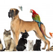 Group of pets - Dog, cat, bird, reptile, rabbit, isolated on whi — ストック写真