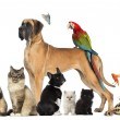 Stock Photo: Group of pets - Dog, cat, bird, reptile, rabbit, isolated on whi