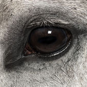 Close-up of an Andalusian eye, 7 years old, also known as the Pure Spanish Horse or PRE — Stock Photo