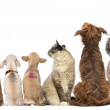 Постер, плакат: Rear view of a group of pets Dogs cats rabbit sitting isola