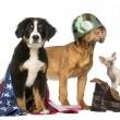 Group of Patriotic dogs and cat — Stock Photo