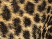 Macro of a Spotted Leopard cub's fur - Panthera pardus, 7 weeks — Stock Photo
