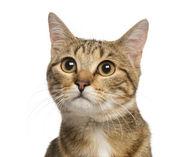 Bliska mieszany rasa kota, 9 miesięcy, na białym tle — Zdjęcie stockowe