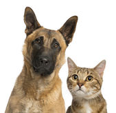 Close-up of a cat and dog, isolated on white — Stock Photo