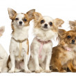 Group of Chihuahua sitting, isolated on white — Stock Photo #26521911