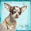 Close-up of Chihuahua with fancy collar, on flowery background — Stok fotoğraf