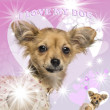 Stock Photo: Close-up of a Chihuahua puppy on glamorous background, 4 months