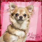 Close-up of a Chihuahua looking at the camera, on flowery backgr — Stockfoto