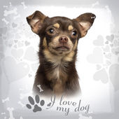 Close-up of a Chihuahua on designed background, 13 months old — Stock Photo