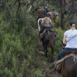 People horse ridding in forest — Stockfoto #28714553