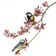 Great Tit and Blue Tit perched on a blossoming branch, isolated — Stock Photo #28735995