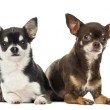 Chihuahuas lying along each other, isolated on white — Stock Photo #28741643
