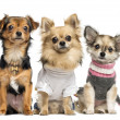 Stock Photo: Group of dressed up Chihuahuas, isolated on white