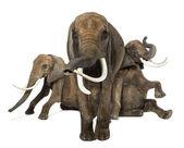 Widok z przodu trzy słonie afrykańskie wykonywania, na białym tle na wh — Zdjęcie stockowe