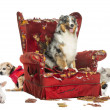 Stock Photo: Group of pets on destroyed armchair, isolated on white