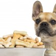 Close up of a French Bulldog, standing behind of a full dog bowl — Stock Photo #32643879
