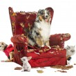 Group of pets on a destroyed armchair, isolated on white — Stock Photo