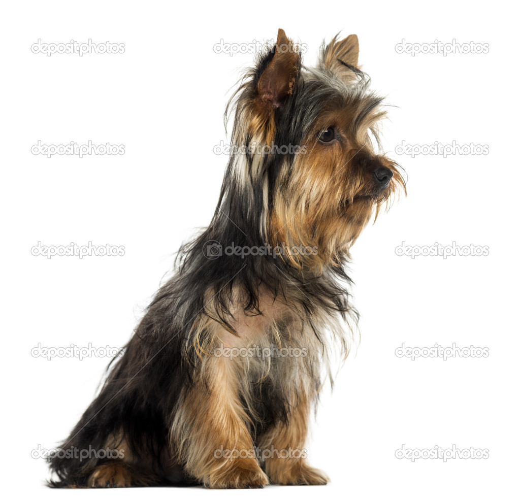 calm small dog breeds that don shed noten animals small apartment