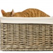 Stock Photo: Europeshorthair hiding in wicker basket, isolated on white