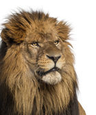 Close-up of a Lion, Panthera Leo, 10 years old, isolated on whit — Stock Photo