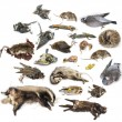Composition of dead animals in state of decomposition, isolated  — Stock Photo #41972859