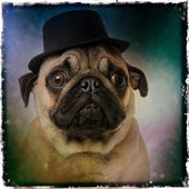 Pug wearing a top hat, on a grunge colored background — Stock Photo
