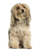 Front view of a Yorkshire terrier sitting, isolated on white — Stock Photo