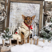 Dressed-up Chihuahua sitting on a bridge in a winter scenery — Stok fotoğraf