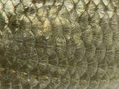 Macro of a Common roach skin, Rutilus rutilus, isolated on white — Stock Photo