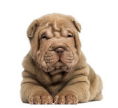 Front view of a Shar Pei puppy lying, isolated on white — Stock Photo