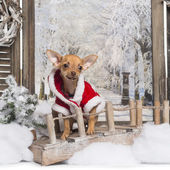 Chihuahua puppy wearing a christmas suit in a winter scenery, 3 — Stock Photo