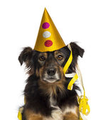 Close-up of a Border collie wearing a party hat, isolated on whi — Stock Photo