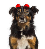 Close-up of a Border collie wearing red round lenses, isolated o — Stock Photo