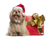 Shih tzu with christmas hat, sitting next to a present box, isol — Stock Photo