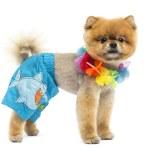 Groomed Pomeranian dog wearing shorts and a Hawaiian lei — Stock Photo #43552637