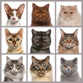 Nine cat heads looking at the camera — Стоковое фото