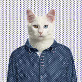 Cat wearing a spotted shirt, spotted background — Stock Photo