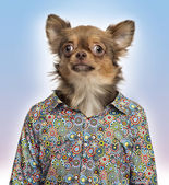 Chihuahua wearing a spotted shirt, colored background — Stock Photo
