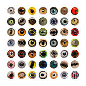 Composition of Animal eyes, isolated  — Stock Photo