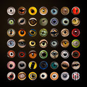 Composition of Animal eyes in cercle — Stock Photo