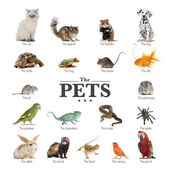 Poster of pets in English — Zdjęcie stockowe