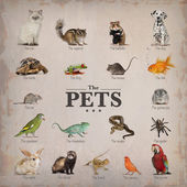 Poster of pets in English — Stock Photo